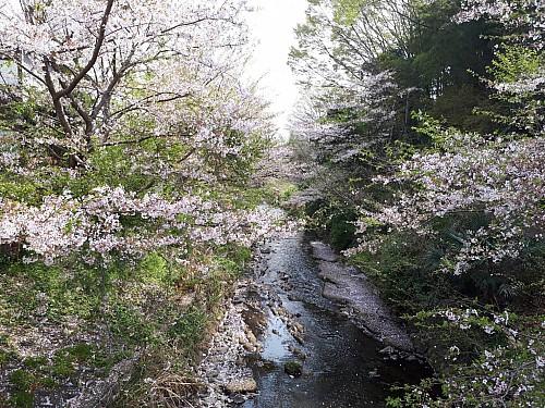 物件近隣葛川春の風景